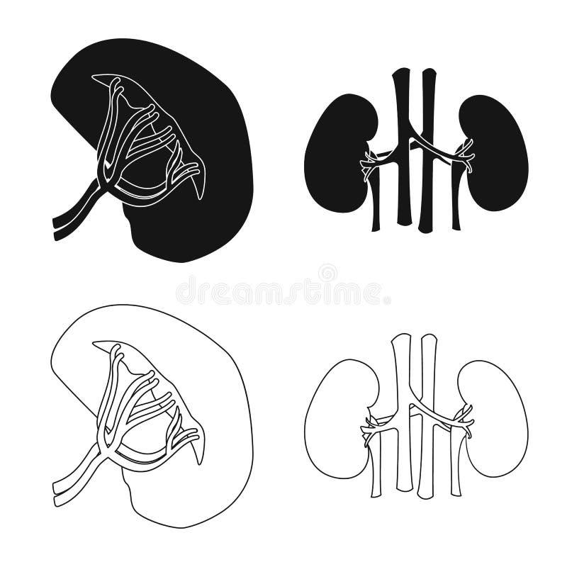 Wektorowy projekt ciała i istoty ludzkiej ikona Set ciało i medyczna akcyjna wektorowa ilustracja ilustracja wektor