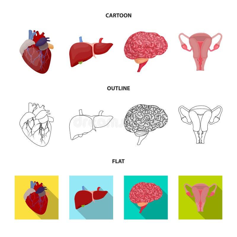 Wektorowy projekt ciała i istoty ludzkiej logo Kolekcja ciało i medyczna akcyjna wektorowa ilustracja ilustracji