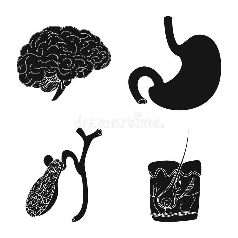 Wektorowy projekt ciała i istoty ludzkiej symbol Kolekcja ciało i medyczna wektorowa ikona dla zapasu royalty ilustracja