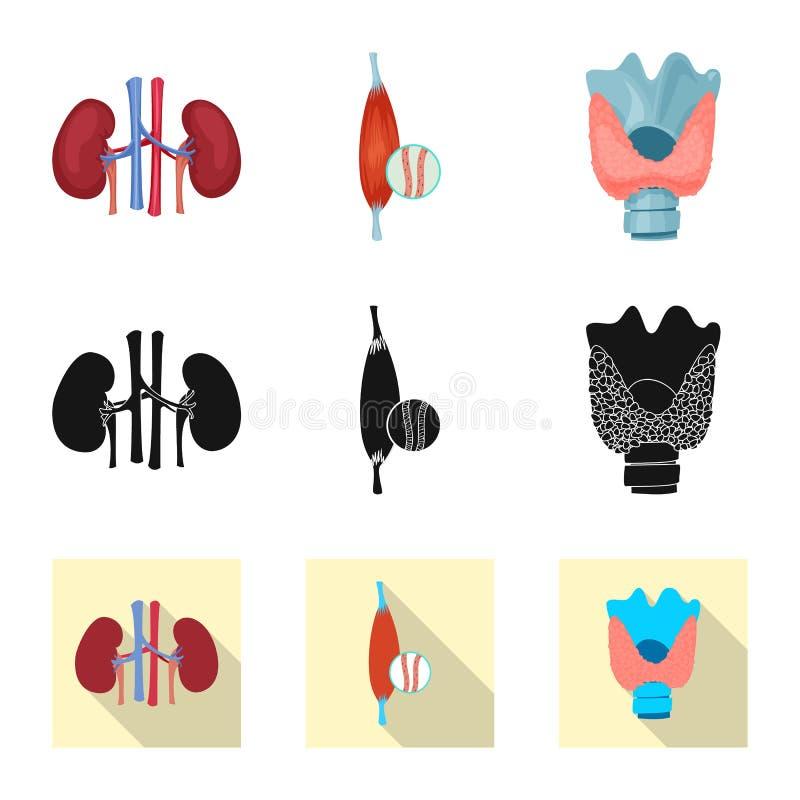 Wektorowy projekt ciała i istoty ludzkiej symbol Set ciało i medyczny akcyjny symbol dla sieci royalty ilustracja