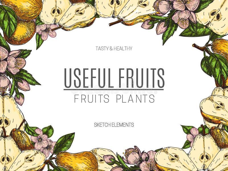 Wektorowy projekt ręka rysująca bonkreta Rocznika nakreślenia stylu ilustracja Organicznie eco jedzenie Całość, pokrajać kawałki  royalty ilustracja
