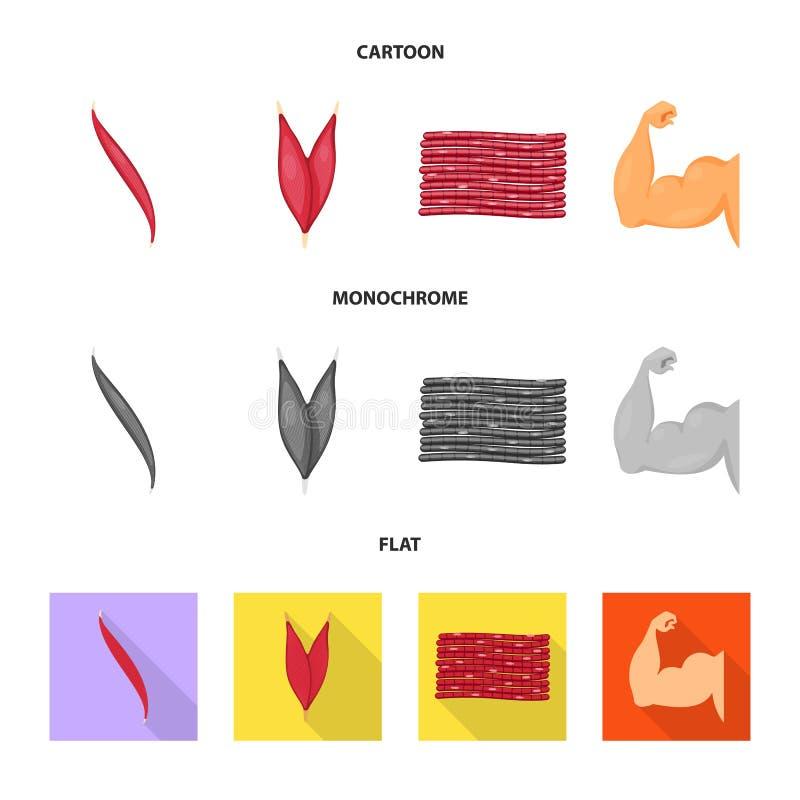 Wektorowy projekt włókno i mięśniowy symbol Kolekcja włókna i ciała akcyjny symbol dla sieci ilustracji
