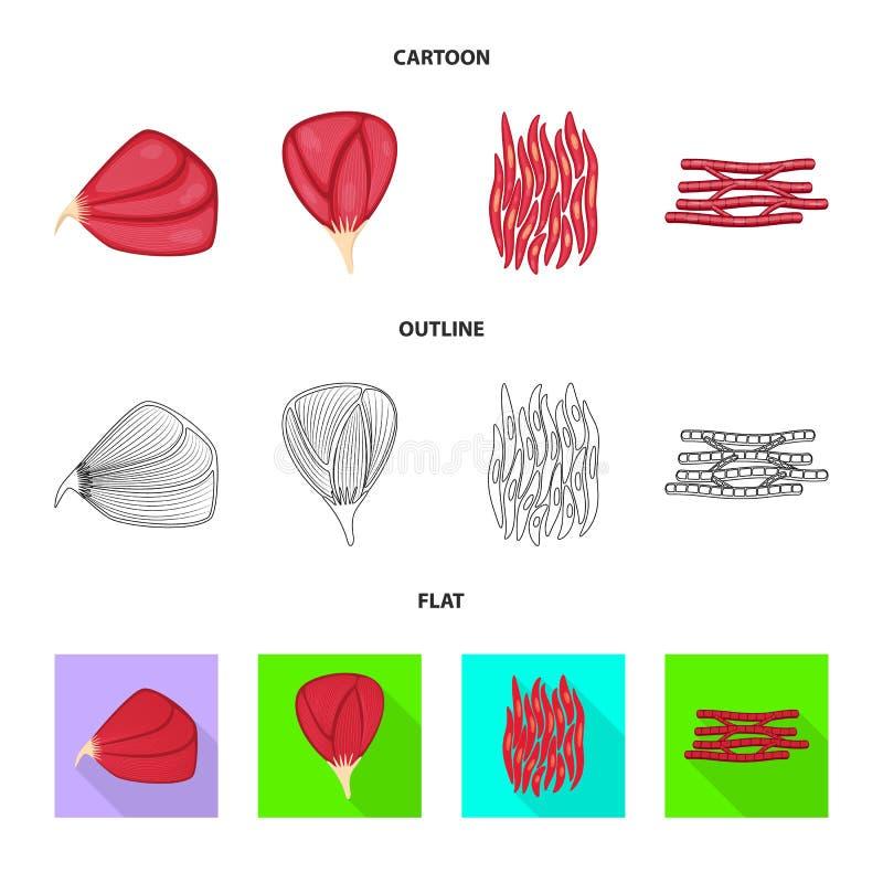 Wektorowy projekt włókno i mięśniowy symbol Set włókna i ciała akcyjny symbol dla sieci royalty ilustracja