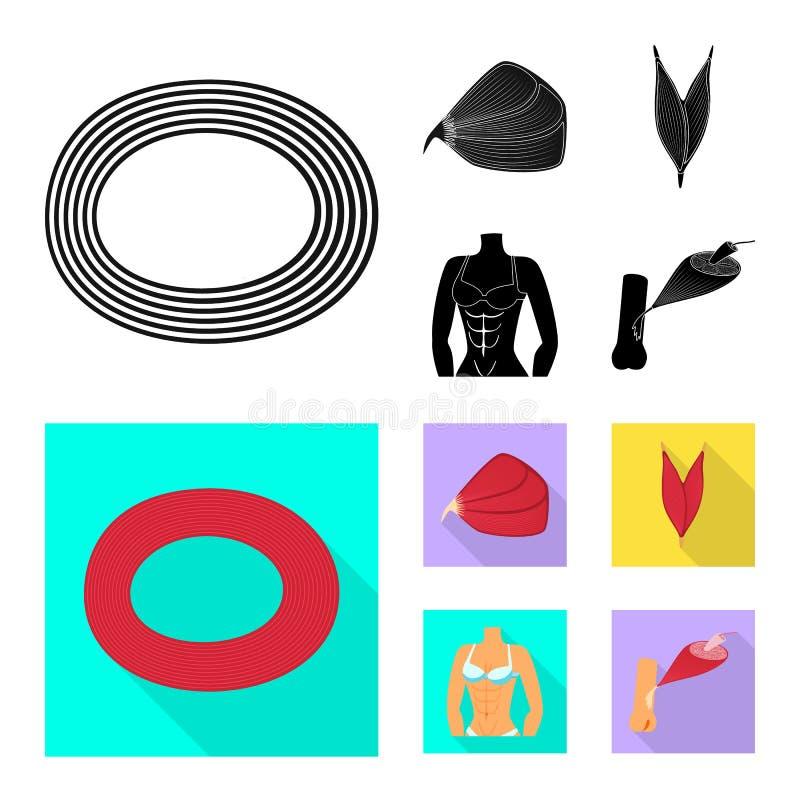 Wektorowy projekt włókno i mięśniowy znak Kolekcja włókna i ciała akcyjny symbol dla sieci ilustracja wektor