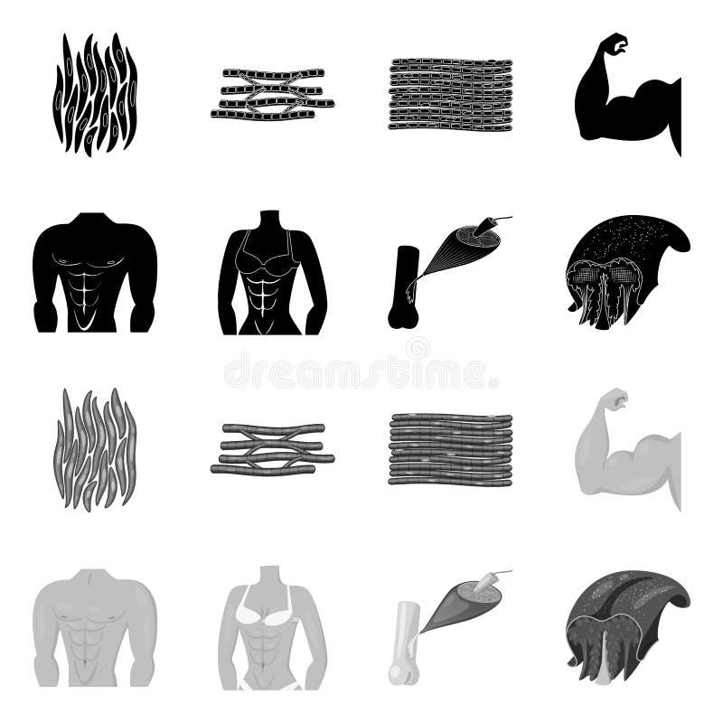 Wektorowy projekt włókno i mięśniowy znak Set włókna i ciała akcyjna wektorowa ilustracja royalty ilustracja