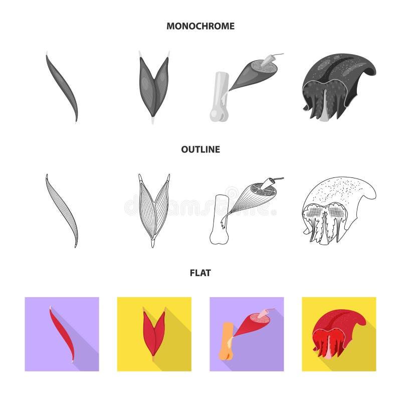 Wektorowy projekt włókno i mięśniowy znak Set włókna i ciała akcyjny symbol dla sieci royalty ilustracja