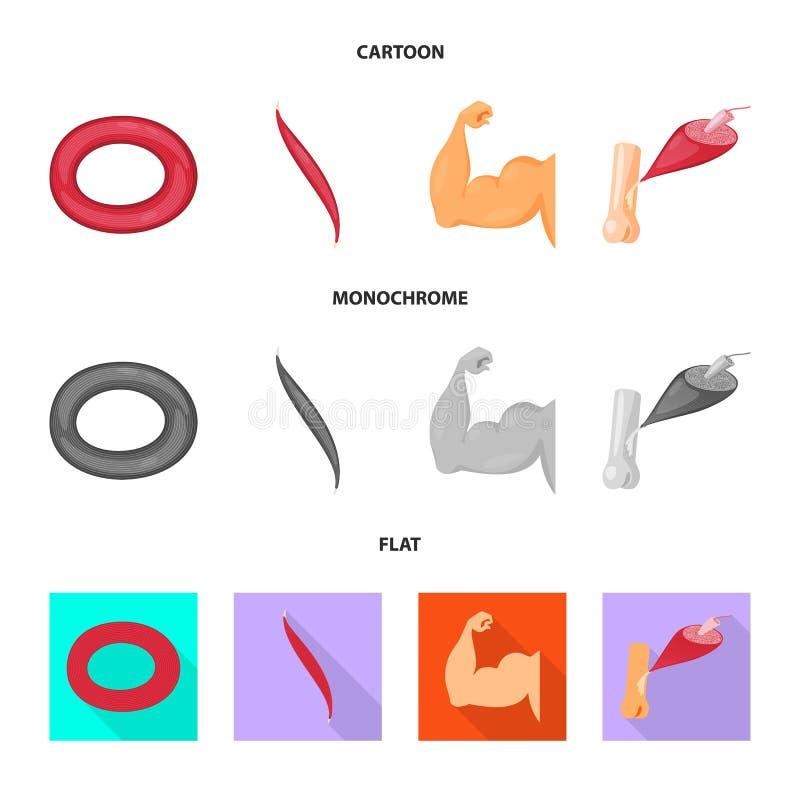 Wektorowy projekt włókno i mięśniowy znak Set włókna i ciała wektorowa ikona dla zapasu ilustracja wektor