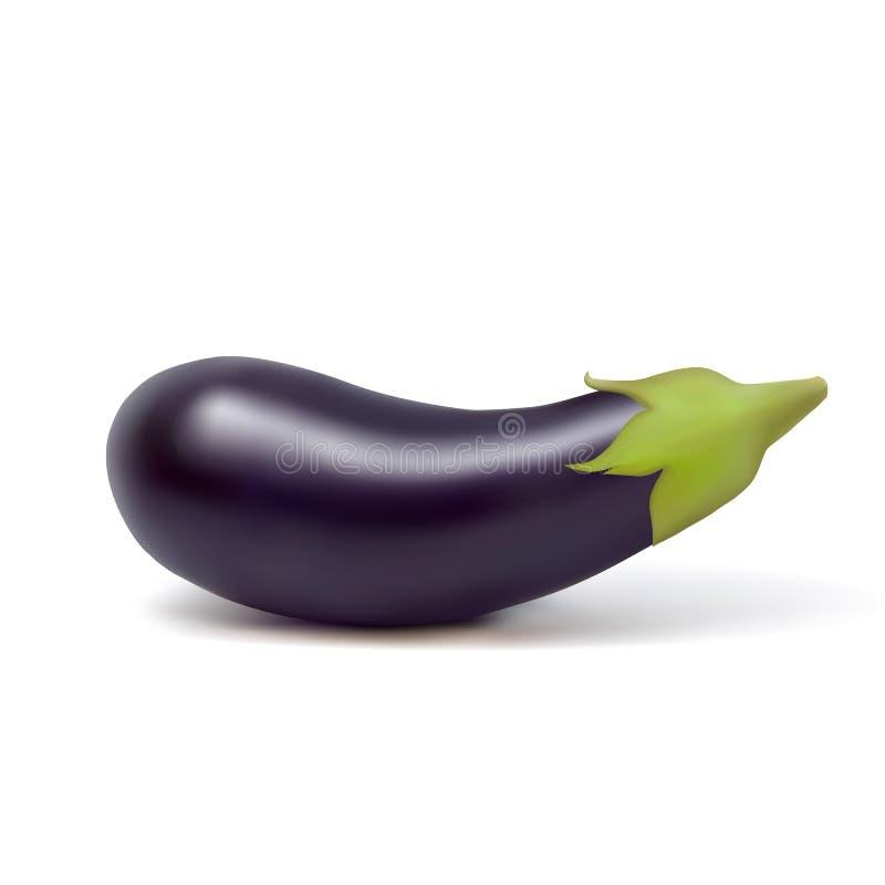 Wektorowy realistyczny świeży aubergine na białym tle royalty ilustracja