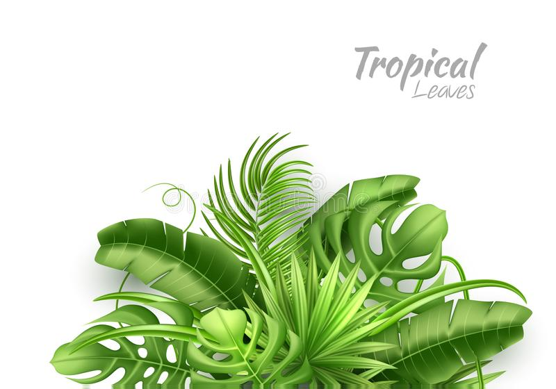 Wektorowy realistyczny tropikalny liścia egzota wakacje ilustracji
