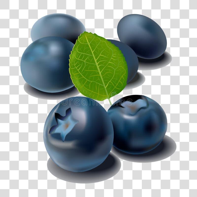 Wektorowy realistyczny wizerunek czarne jagody ilustracji