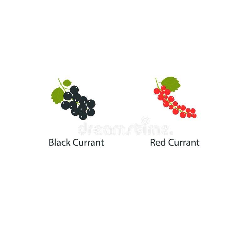 Wektorowy rodzynek odizolowywający na białym tle w płaskim stylu Ilustracja świeże jagody z zielonym liściem Rewolucjonistka i ilustracja wektor