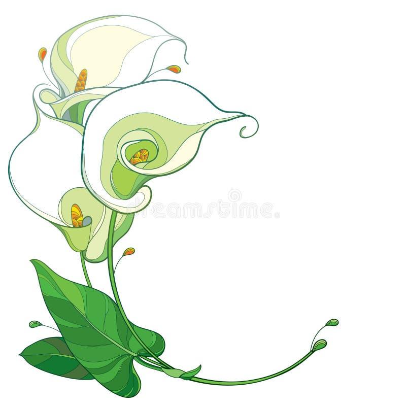 Wektorowy round bukiet kontur kalii lelui Zantedeschia w pastelowym bielu z ozdobnym zielonym liściem odizolowywającym na bielu l royalty ilustracja