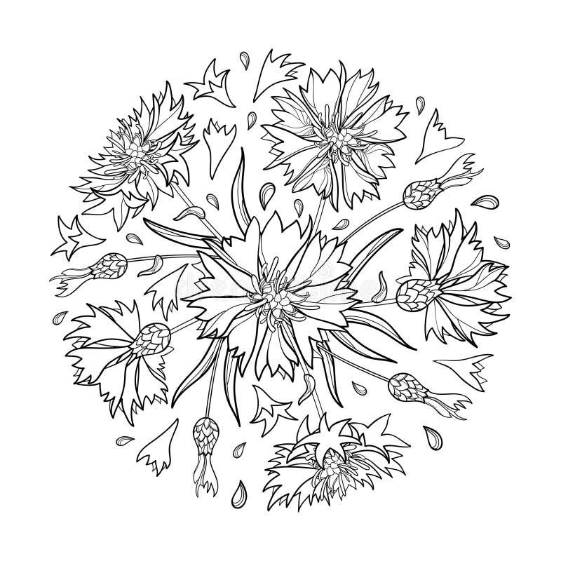 Wektorowy round bukiet z konturem Chabrowy, Knapweed lub Centaurea kwiat, pączek i liść w czerni odizolowywającym na białym tle, royalty ilustracja