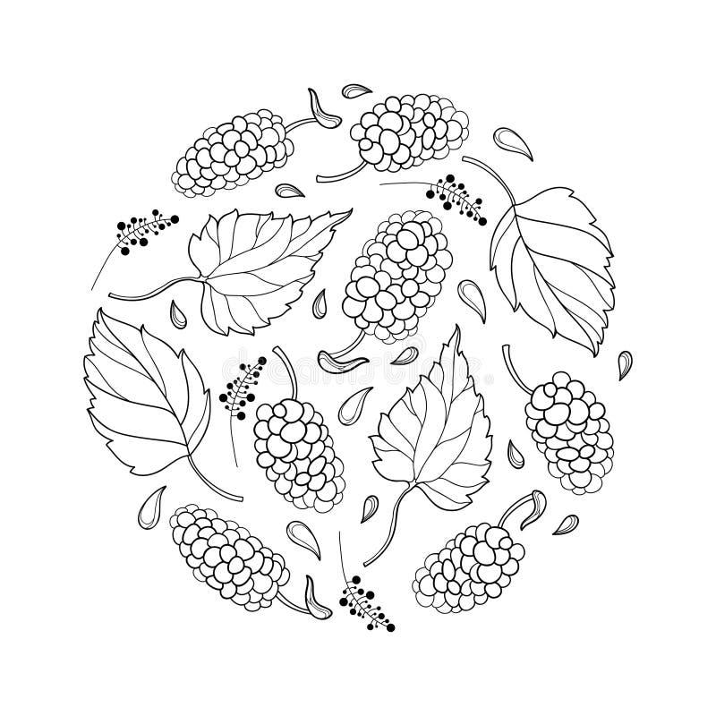 Wektorowy round skład z konturu Morus z lub morwą dojrzałą jagodą i liściem w czerni odizolowywającym na białym tle royalty ilustracja