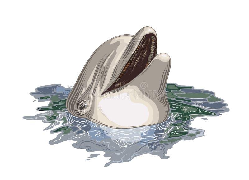 Wektorowy rysunek delfin w kolorze, odosobniony na białym tle r Rysowa? dla ilustracji