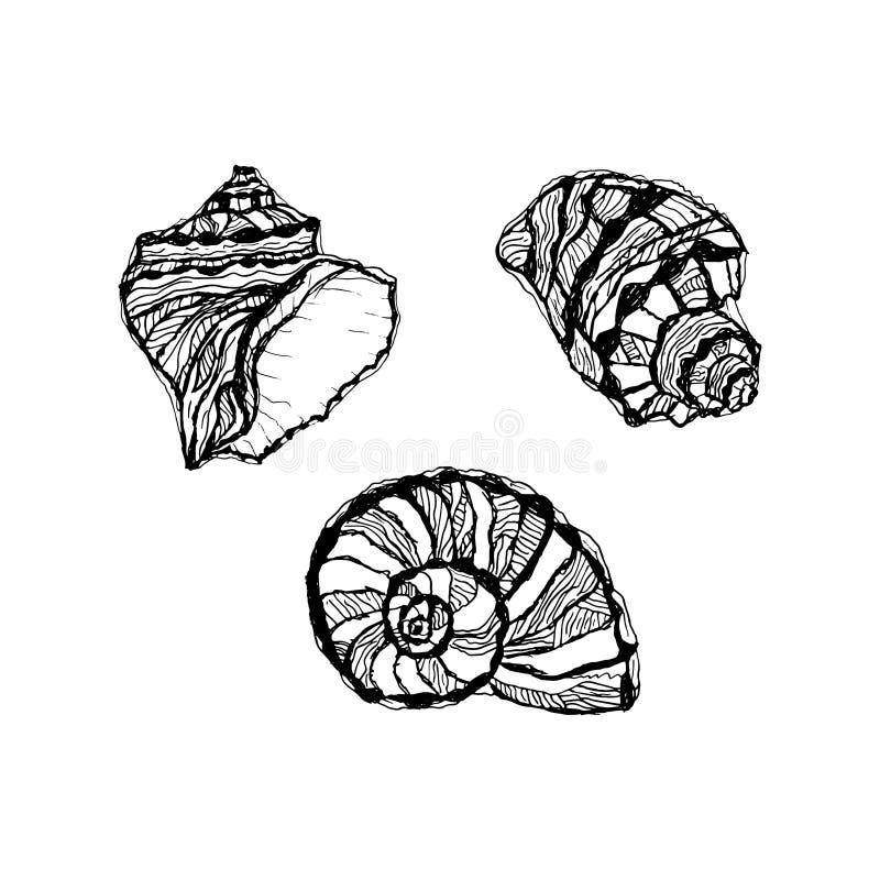 Wektorowy seashell set Ręka rysująca ilustracja nakreślenia mollusk ilustracja wektor