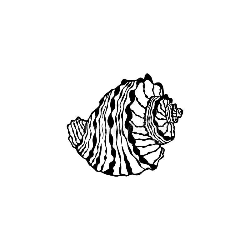 Wektorowy seashell set Ręka rysująca ilustracja nakreślenia mollusk ilustracji