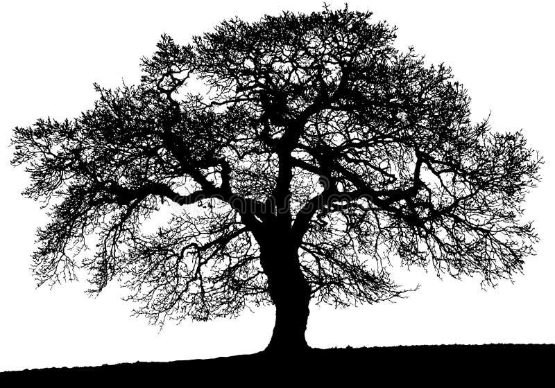 Wektorowy stary duży czarny drzewo ilustracja wektor