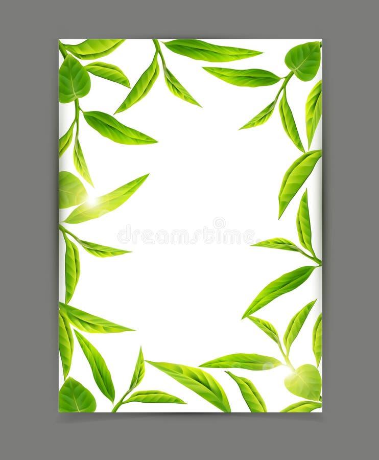Wektorowy szablon z ramą zielona herbata opuszcza, odizolowywał na wh, royalty ilustracja