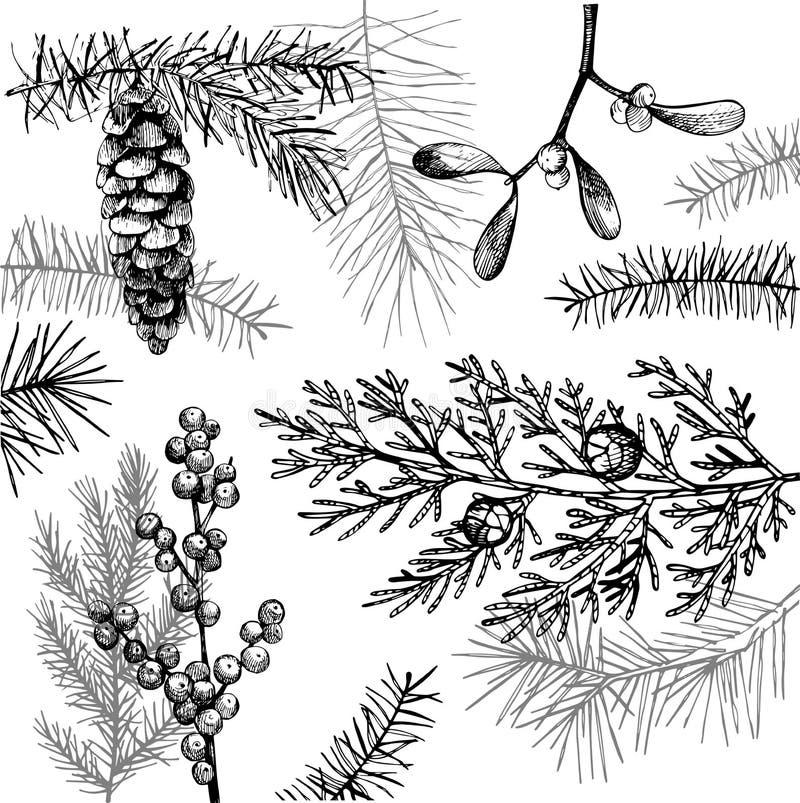 Wektorowy tło z Bożenarodzeniowymi roślinami ilustracja wektor