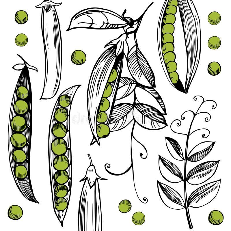 Wektorowy tło z ręka rysującymi grochami ilustracja wektor
