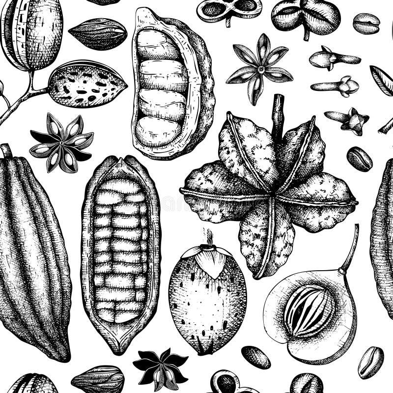 Wektorowy tło z toniką i korzennymi roślinami Ręka rysujący bezszwowy wzór z pikantność ilustracjami Roczników aromatyczni elemen ilustracja wektor