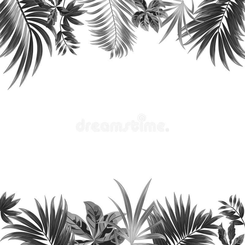 Wektorowy tropikalny dżungli tło z drzewkami palmowymi dalej i liśćmi ilustracja wektor