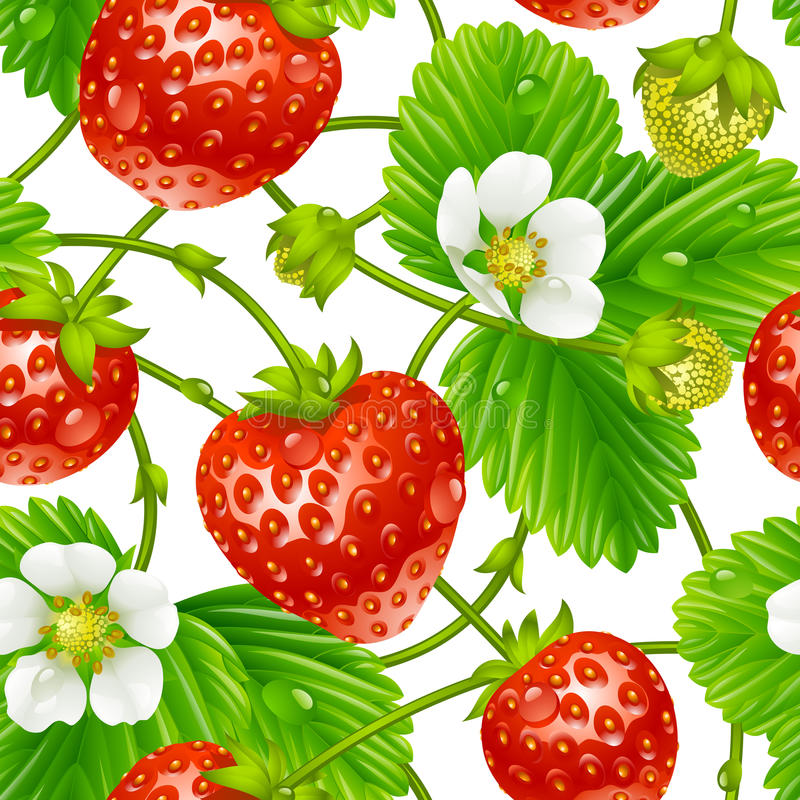 Wektorowy truskawkowy bezszwowy wzór na białym backgr ilustracja wektor