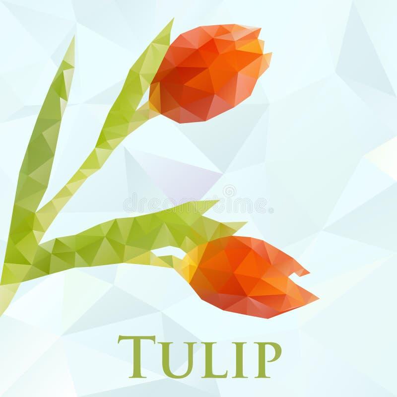 Wektorowy tulipan Abstrakt kwitnie geometrycznego ilustracji