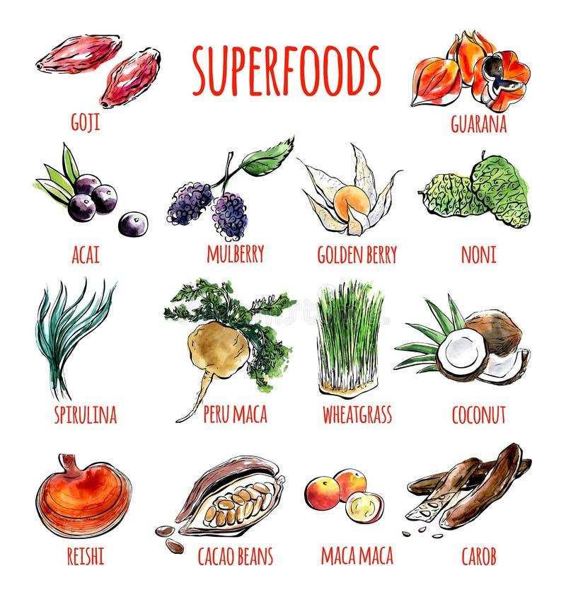 Wektorowy ustawiający akwareli ilustracje zdrowi superfoods ilustracji