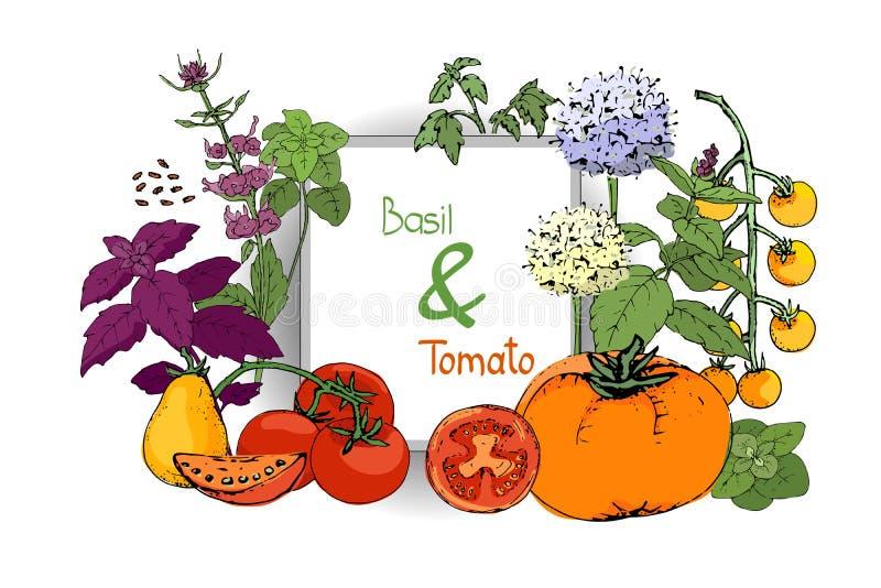 Wektorowy ustawiający basilów pomidory i roślina ilustracja wektor