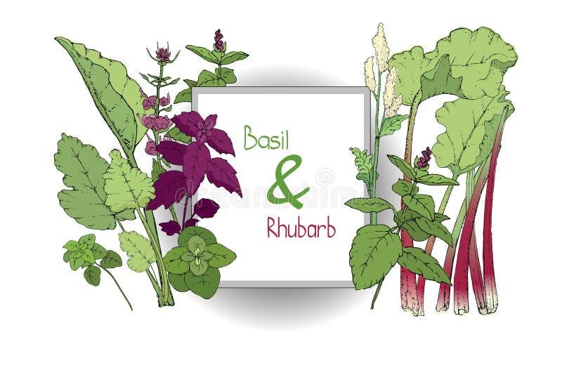 Wektorowy ustawiający basila rabarbar i roślina royalty ilustracja