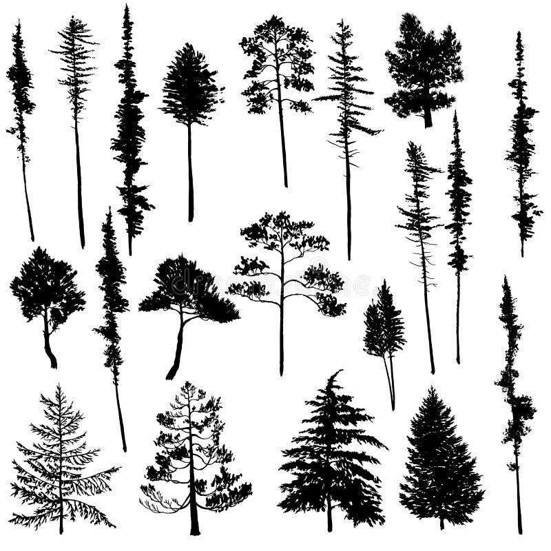 Wektorowy ustawiający conifer drzewa ilustracja wektor