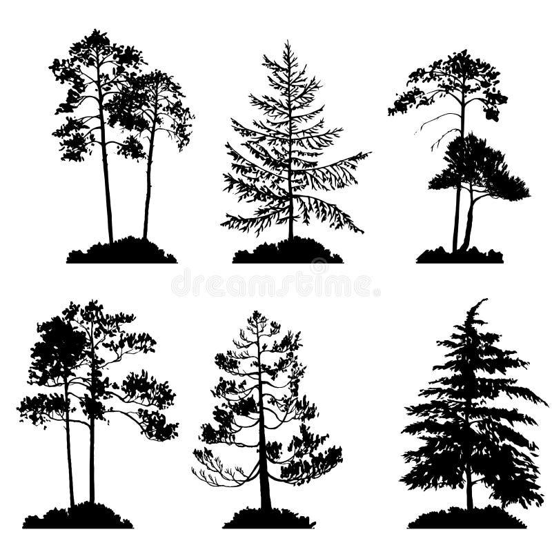 Wektorowy ustawiający conifer drzewa ilustracji
