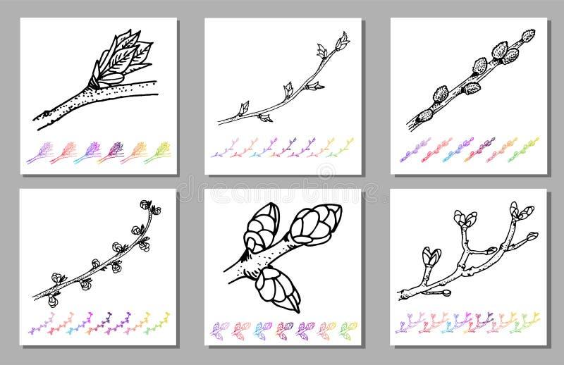 Wektorowy Ustawiający cynaderki pączka czerni wzór w roślina projekcie Ręki malować wiosna ogródu flory Czarny sletch odizolowywa royalty ilustracja