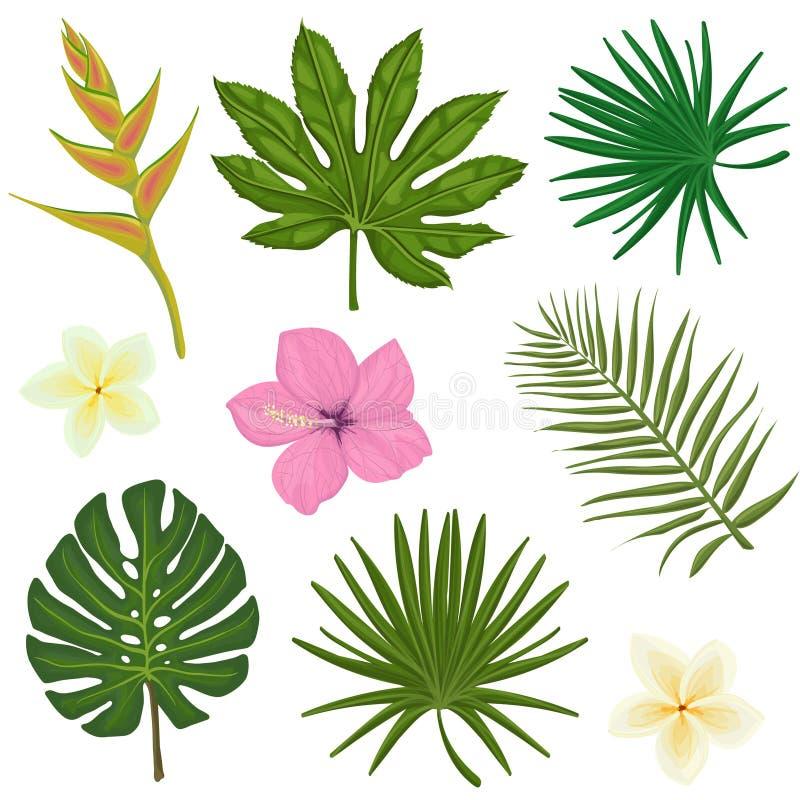 Wektorowy ustawiający ilustracje z tropikalnymi liśćmi i ilustracji
