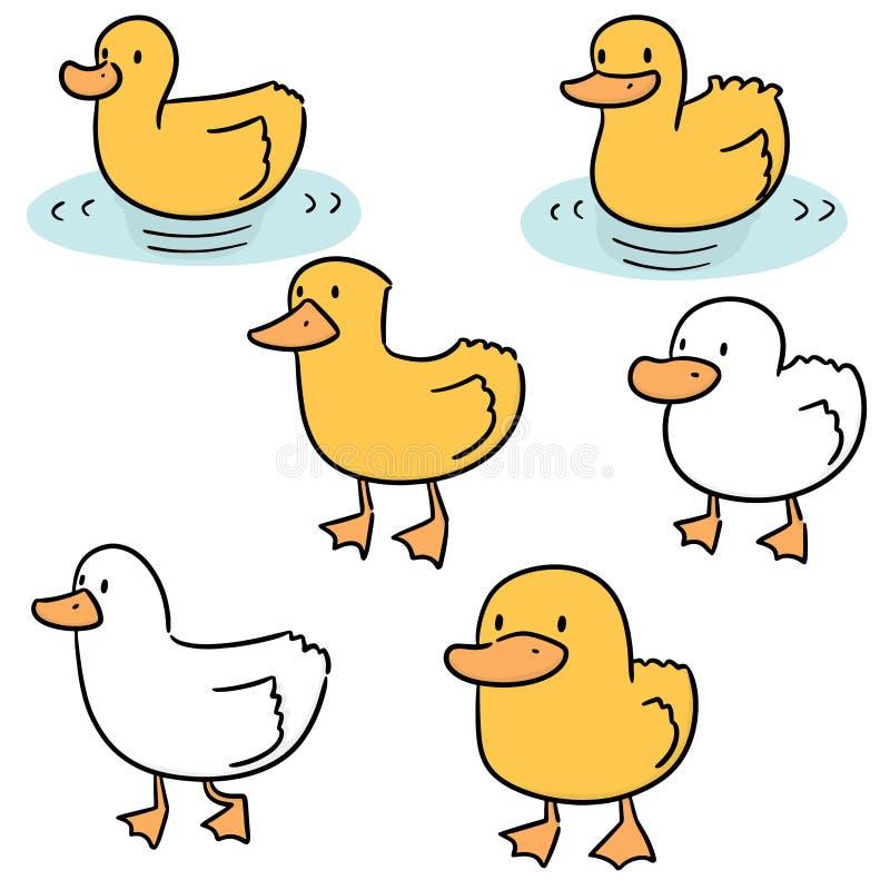 Wektorowy ustawiający kaczka ilustracji