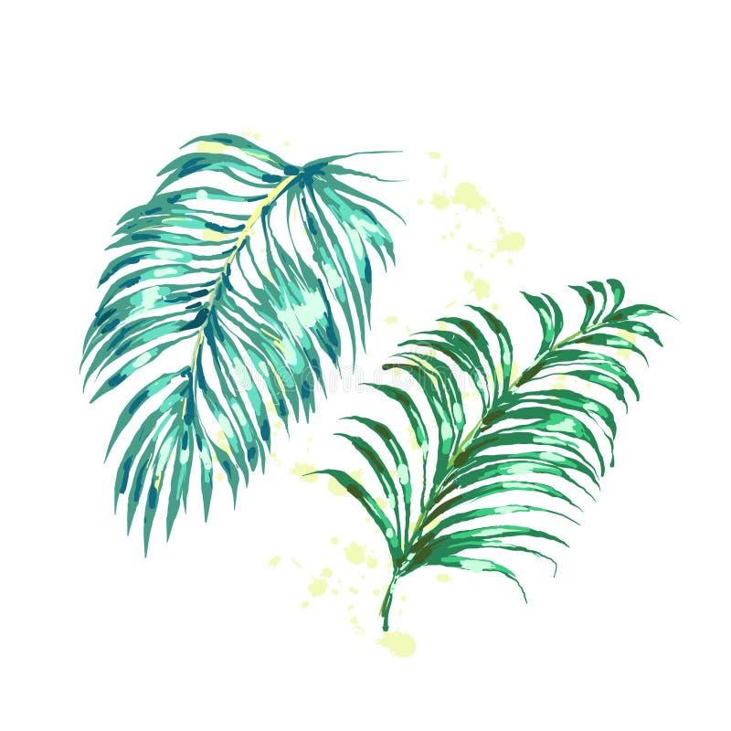 Wektorowy ustawiający różni zieleni tropikalni palma liście odizolowywający na białym tle ilustracji