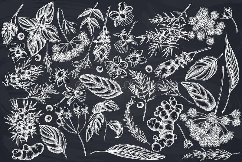 Wektorowy ustawiający ręka rysujący kredowy arcydzięgiel, basil, jałowiec, hypericum, rozmaryn, turmeric ilustracja wektor