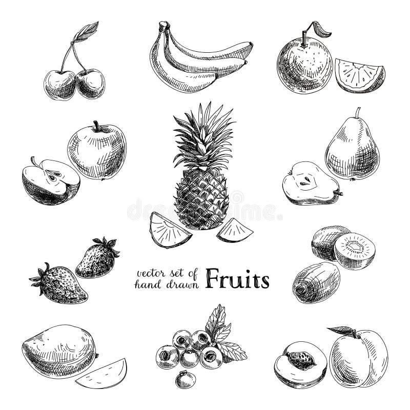 Wektorowy ustawiający ręki rysować rocznik owoc i obrazy royalty free