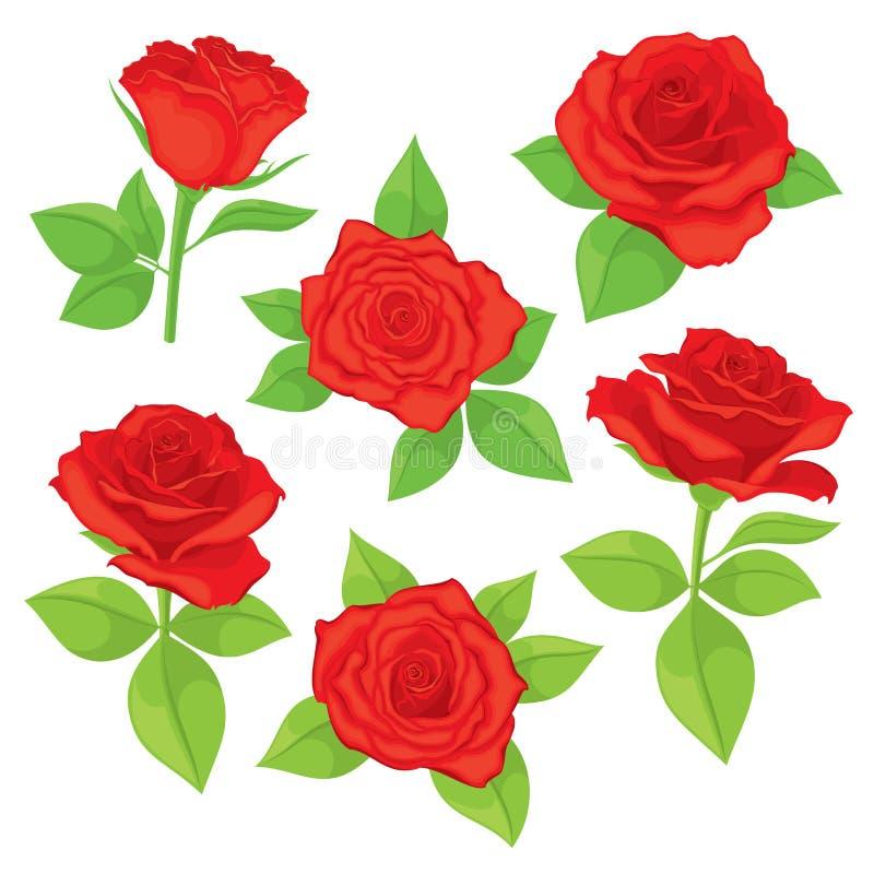 Wektorowy ustawiający realistyczny, szczegółowy, odosobniony Wzrastał pączki w czerwonym kolorze z zielonymi liśćmi na białym tle ilustracja wektor