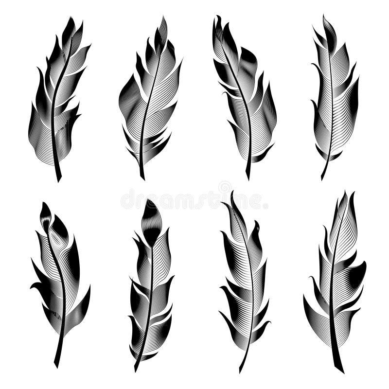 Wektorowy ustawiający stylizowani ptasi piórka Liniowa kolekcja dla dekoraci ilustracji