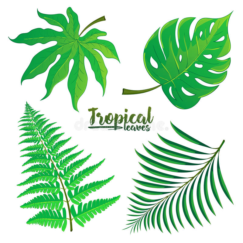 Wektorowy ustawiający tropikalni palmowi liście odizolowywający na białym tle ilustracji