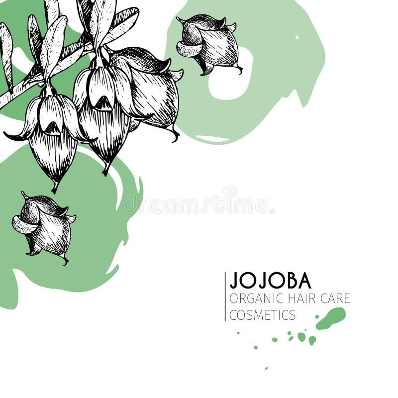 Wektorowy ustawiający włosianej opieki składniki Organicznie ręka rysujący elementy Jojoba gałąź ilustracja wektor