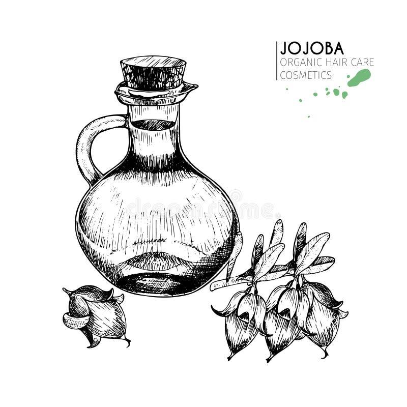 Wektorowy ustawiający włosianej opieki składniki Organicznie ręka rysujący elementy Jojoba i butelka olej ilustracja wektor