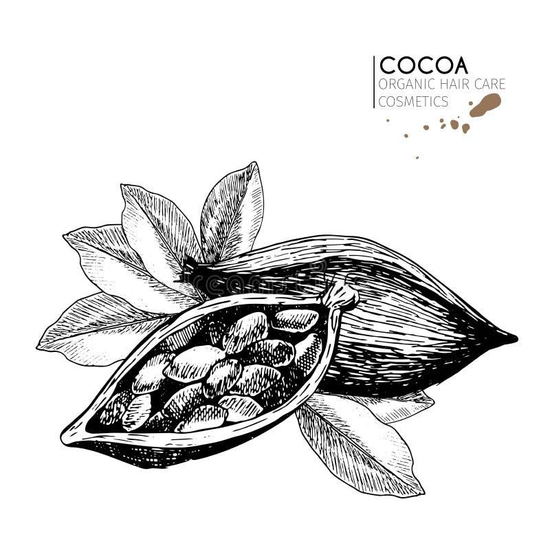 Wektorowy ustawiający włosianej opieki składniki Organicznie ręka rysujący elementy Kakaowe fasole i liście royalty ilustracja