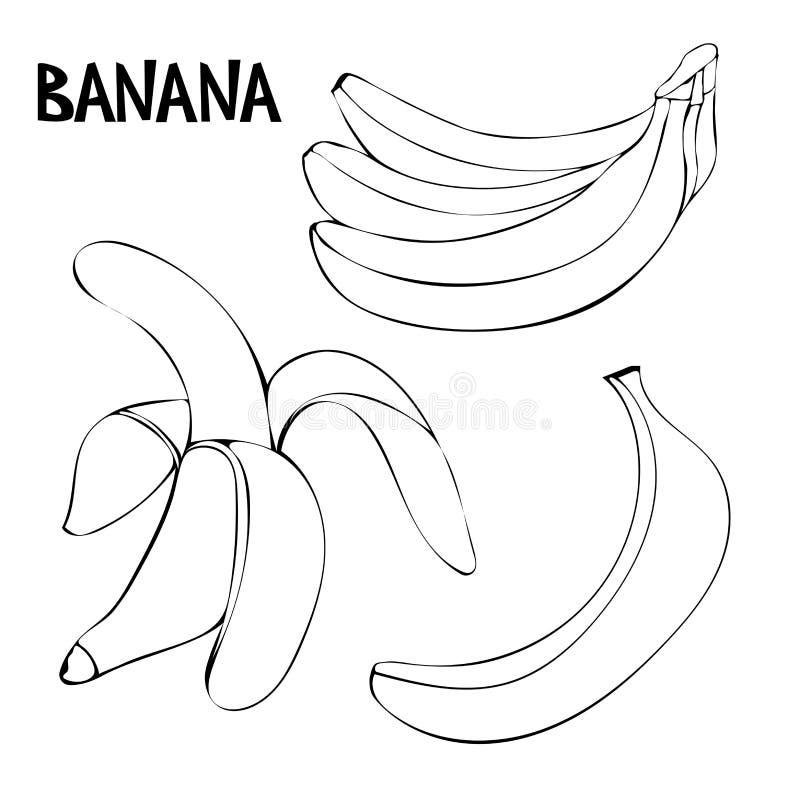 Wektorowy ustawiający z bananami: wiązka banany, unpeeled banan, obrany banan ilustracja wektor