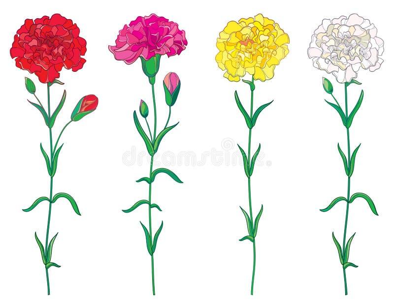 Wektorowy ustawiający z kontur czerwienią, menchie, pastelowy goździk, Goździkowy kwiat, pączek lub liść odizolowywający na biały royalty ilustracja
