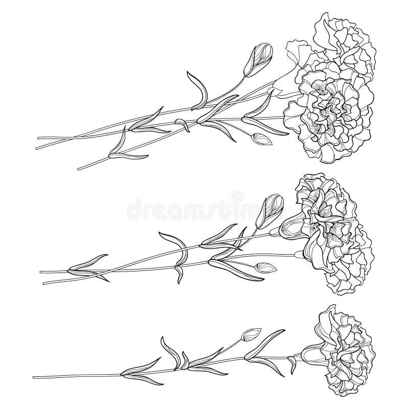 Wektorowy ustawiający z konturu goździkiem Kwitnie, pączkuje, i liście w czerni odizolowywającym na białym tle Ozdobni kwieciści  ilustracji