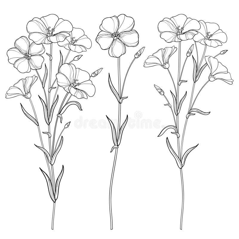 Wektorowy ustawiający z, Linum lub kwitniemy wiązkę, pączek i liść w czerni odizolowywającym na białym tle, ilustracja wektor